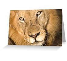 Male Lion - Here's Lookin' At Ya Greeting Card