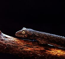 Lizzard Baby with a bubble between his eyes....... Outback by Imi Koetz