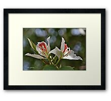 Miraculous Duality Framed Print