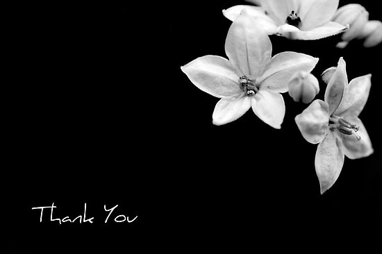 thank you note by NEmens