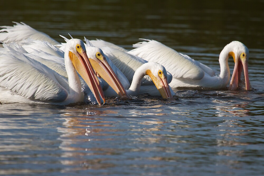The Fishing Party by noffi