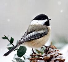 Winter Chickadee Christmas Bird Art by Christina Rollo