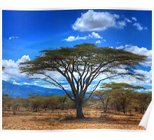 The Acacia Tree - Africa Poster