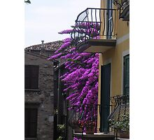 Balconies and Bougainvillaea Photographic Print