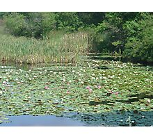 Restful Lilies Photographic Print