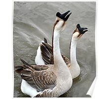 Noisy Geese!! Poster