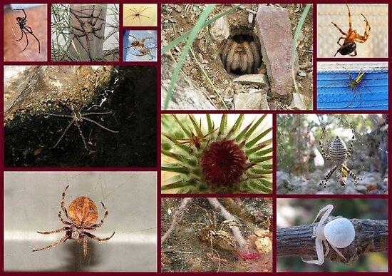 Arachnaphobia ~ Fear of Spiders by Kimberly Chadwick