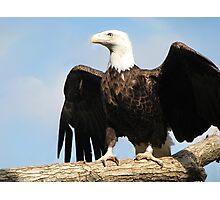 The Regal Eagle Photographic Print