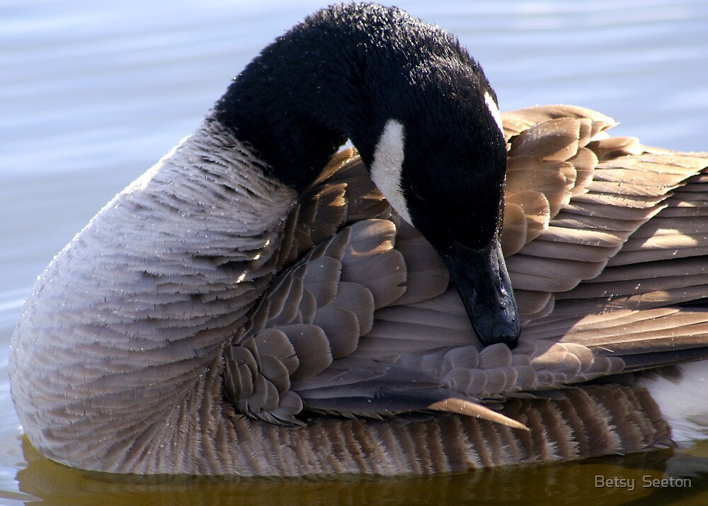 Goose Shapes by Betsy  Seeton