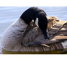 Goose Shapes Photographic Print