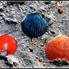 Shells, beautiful shells!!!! by kgphoto