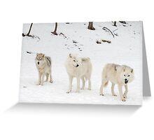 Three Bad Wolves Greeting Card