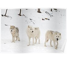 Three Bad Wolves Poster