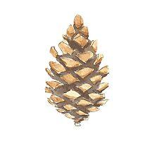 Pine Cone by AmazingMart