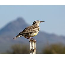 Meadowlark ~ Western Photographic Print