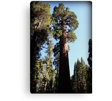 Among the Giants Canvas Print