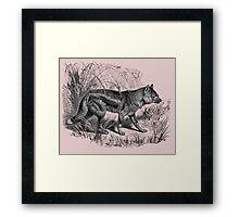 sidestriped jackal Framed Print
