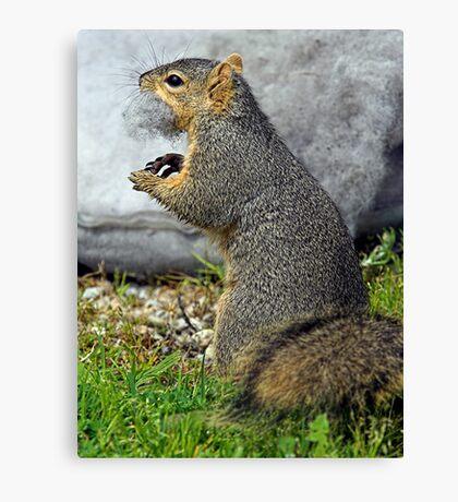 Rabid Squirrel or Stuffing Stealer? Canvas Print
