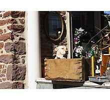 Look at that Doggy in the window Photographic Print