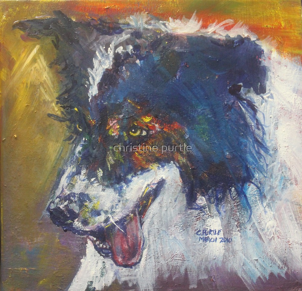 Border Collie by christine purtle