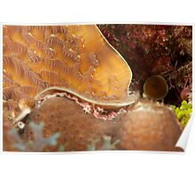 Cayman coral Poster