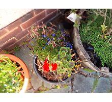 Tilt shift & Plant pots Photographic Print