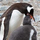 Gentoo Penguin and Chick ~ &quot;Pre-packaged Krill&quot; by Robert Elliott