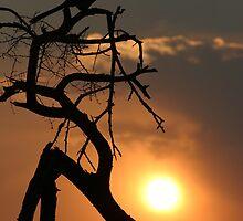 Grey Go-away-bird sunset silhouette by John Banks