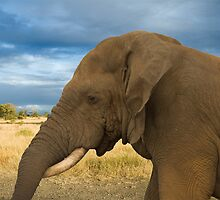 Resting her Trunk by Vickie Burt