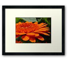 Orange Infusion Framed Print