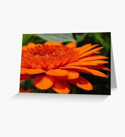 Orange Infusion Greeting Card