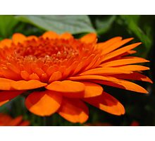 Orange Infusion Photographic Print