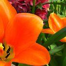 Intensely Orange by Margybear