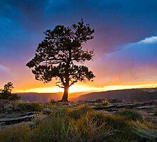 Ponderosa Sunset at Red Canyon by Kim Barton