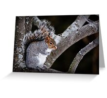 Grey Squirrel in Tree - Ottawa, Ontario Greeting Card