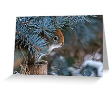 Red Squirrel in Spruce tree - Ottawa, Ontario - 2 Greeting Card