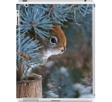 Red Squirrel in Spruce tree - Ottawa, Ontario - 2 iPad Case/Skin