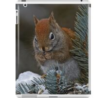 Red Squirrel in Spruce tree - Ottawa, Ontario iPad Case/Skin