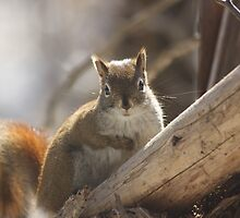 Looking in a squirrel mirror by Josef Pittner
