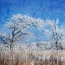 Frosty Morn by Vickie Emms