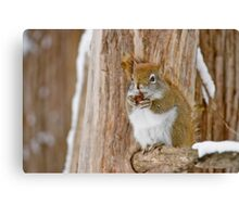 Red Squirrel - Dinner Time Canvas Print
