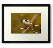 Red Breasted Nuthatch - Ottawa, Ontario Framed Print