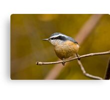 Red Breasted Nuthatch - Ottawa, Ontario Canvas Print