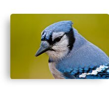 Blue Jay Portrait Canvas Print