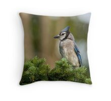 Blue Jay in Spruce Tree - Ottawa, Ontario Throw Pillow