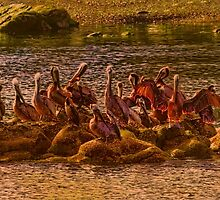 Pelicans At Sunset Southern Oregon Coast by Diane Schuster