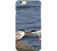 Feeding Time - Common Terns, Ottawa, Ontario iPhone Case/Skin