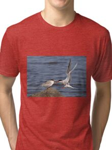 Feeding Time - Common Terns, Ottawa, Ontario Tri-blend T-Shirt
