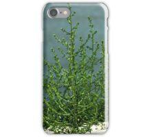 Beach Plant iPhone Case/Skin