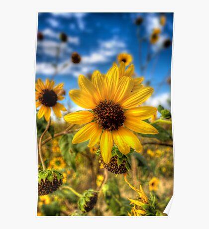 Sunflower Circus Poster
